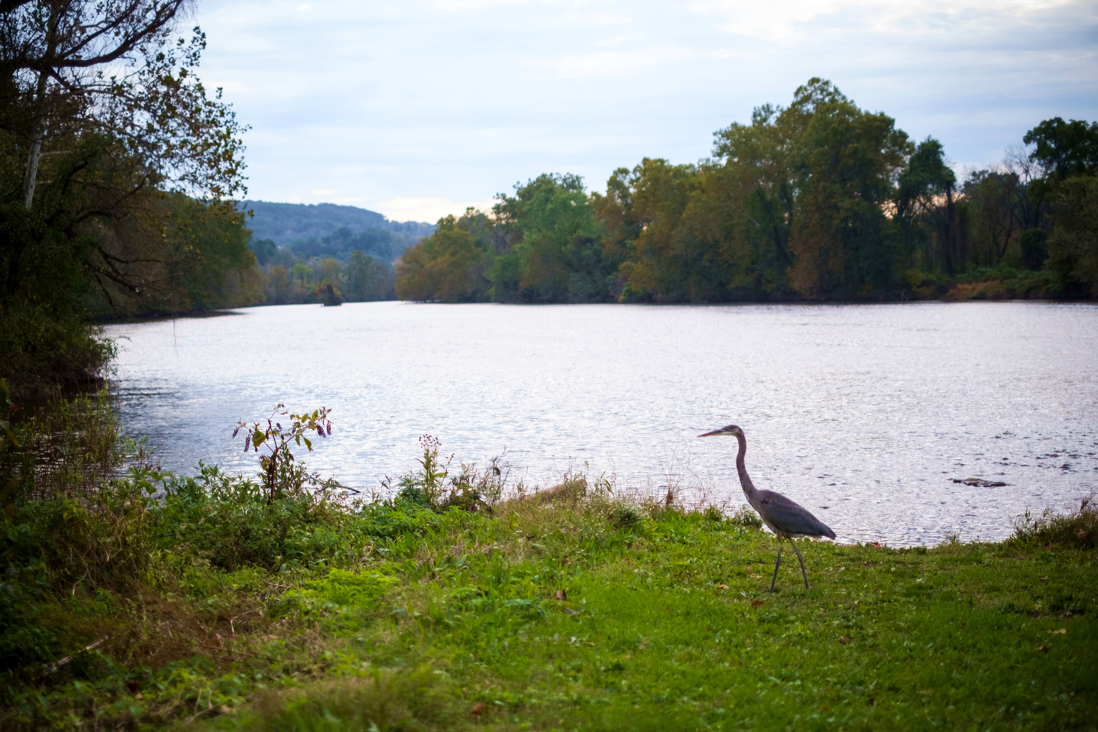 Heron stands by the Lehigh River at Hugh Moore Park