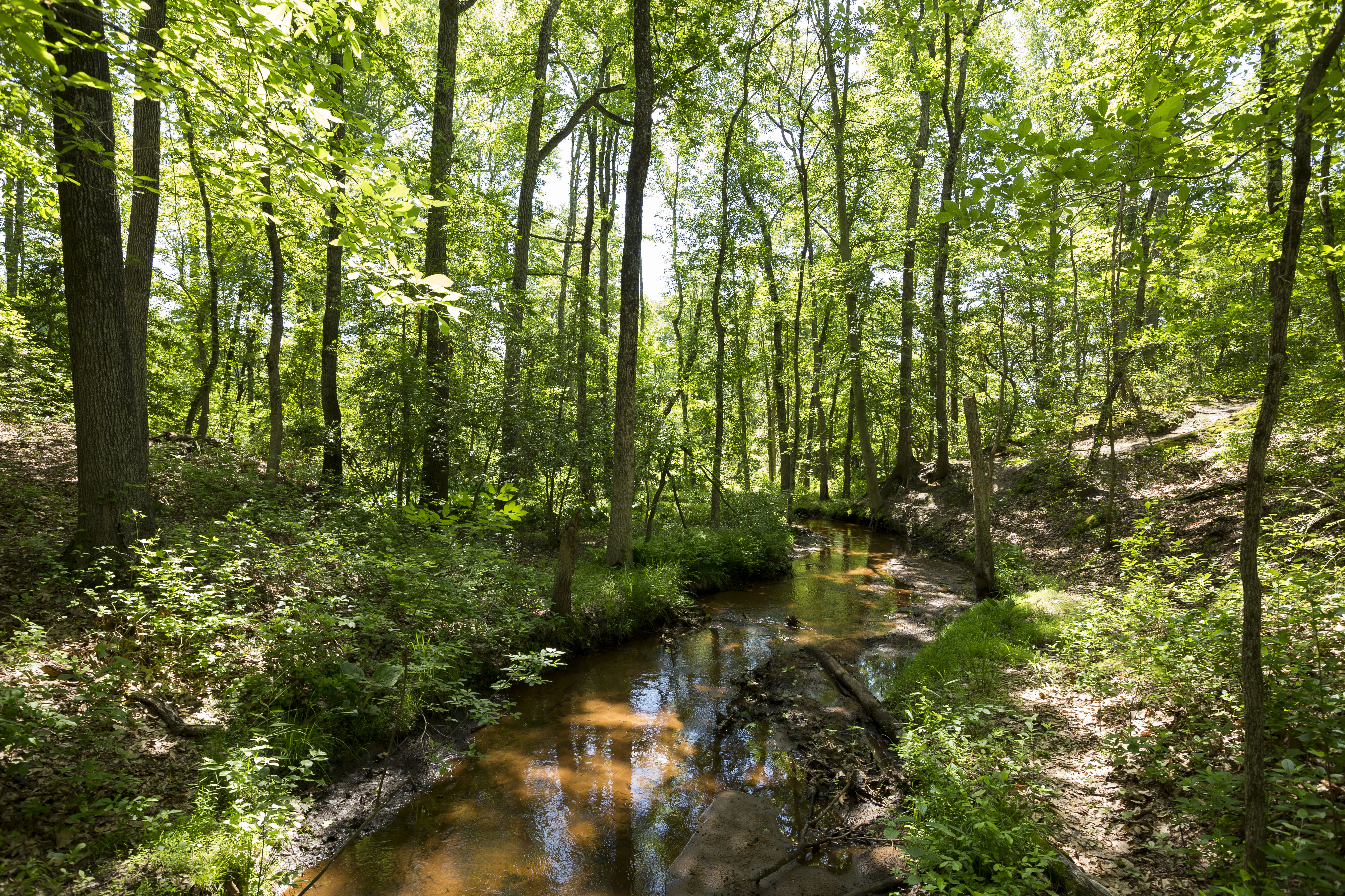 Creek winding through wooded area